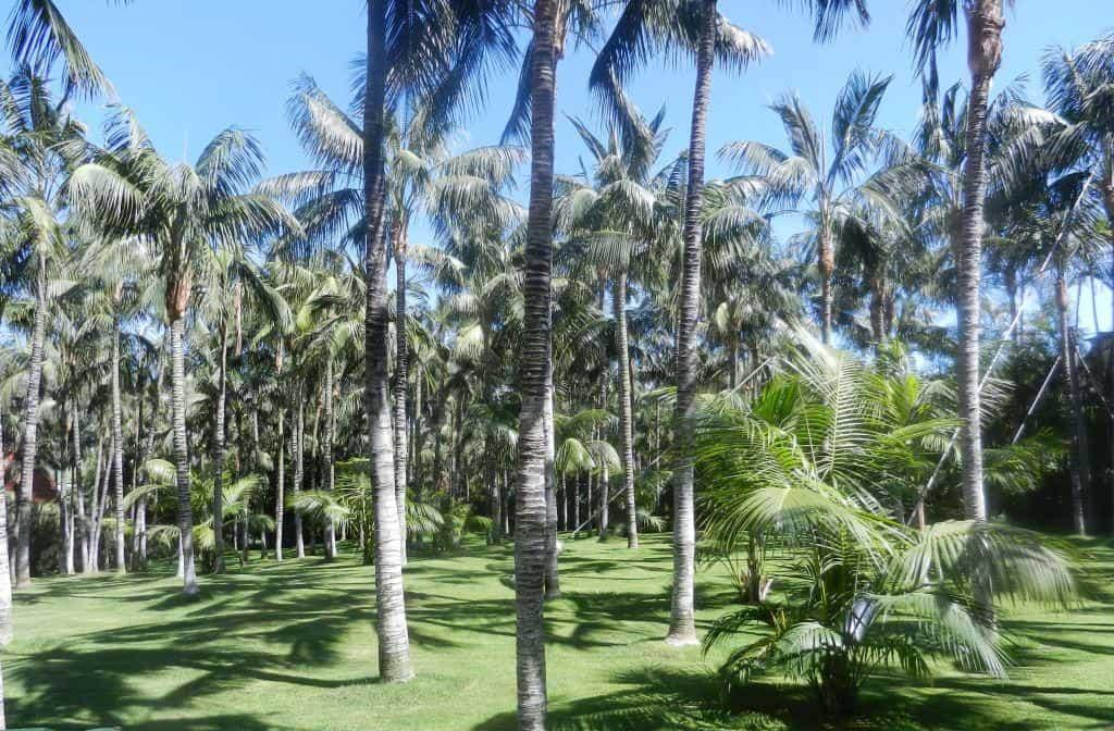 Freifläche Loro Park