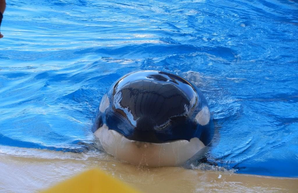 Orca Ocean im Loro Park