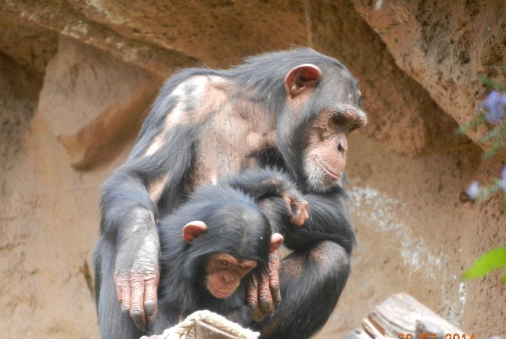 Affen im Loro Park