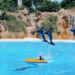 Delfine im Loro Park