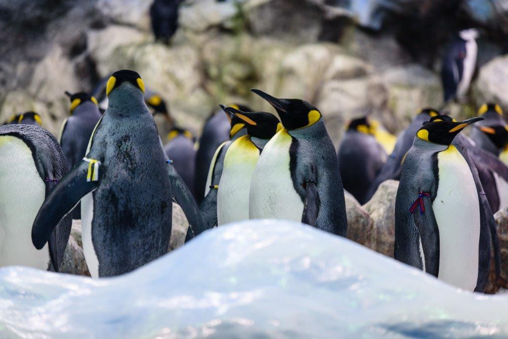 Pinguine im Loro Park