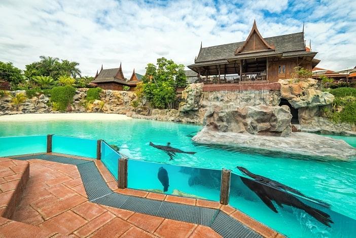 Seelöwen Siam Park
