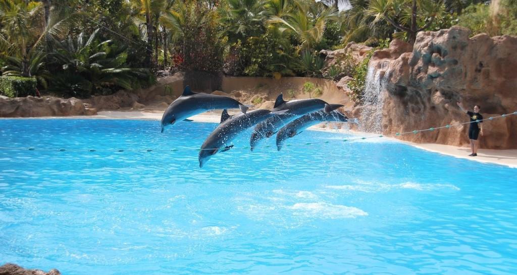 Kunststücke von Delfinen im Loro Park