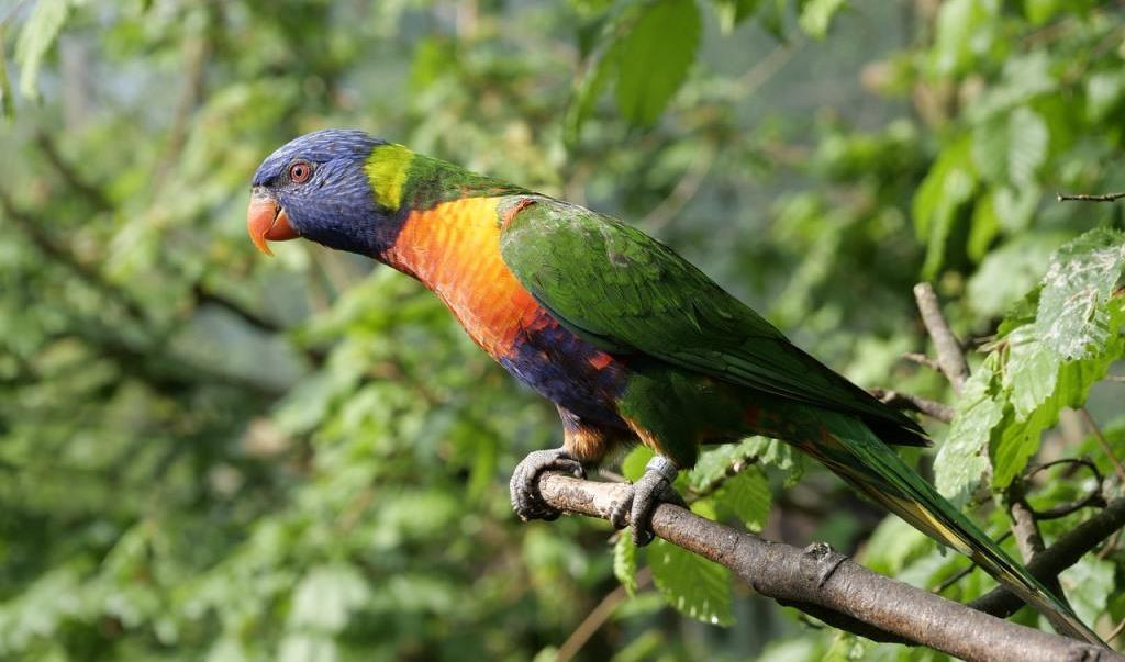 Loro Park Papagei